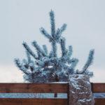 Xmas tree by fence