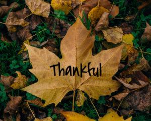 thankful on large leaf